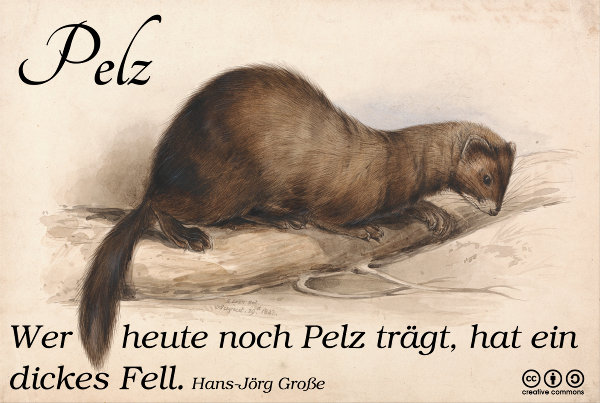 Pelz ~ Aphorismen ~ Hans-Jörg Große ~ Edward Lear